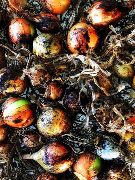 Bejewelled Alliums