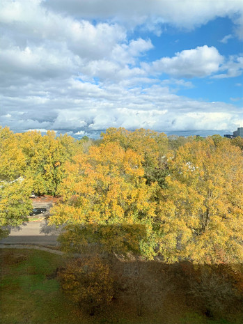 Liz: Original Fall Landscape