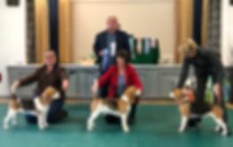 Dog Line Up.jpg