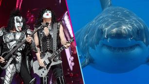 Kiss y un concierto para tiburones