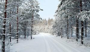 photo credit: Road through Narnia via photopin (license)