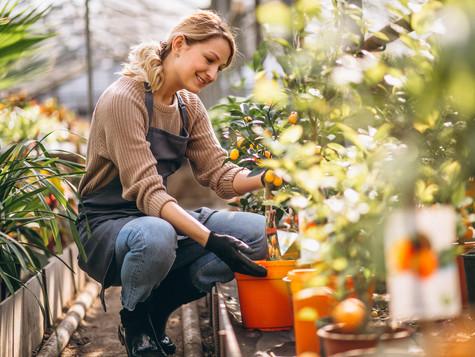 2 usos de la canela para proteger tus plantas