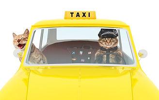 Pet-Taxi.jpg