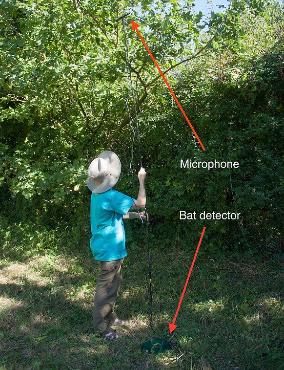 Setting_bat_detector.jpg