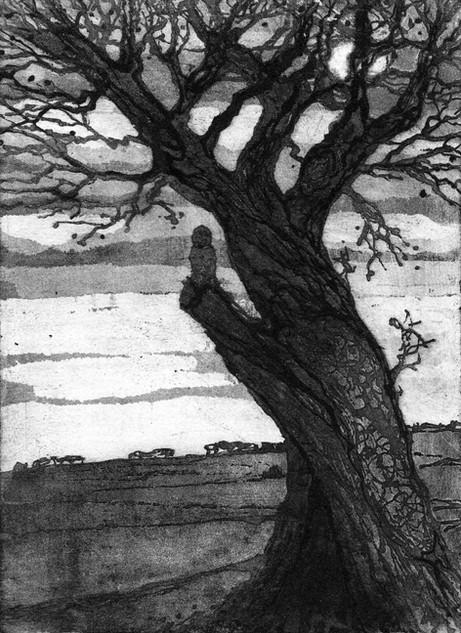 'Fenland Oak'