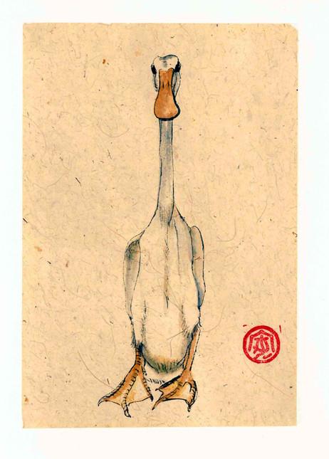 'Indian Runner Duck'
