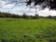 Scarfe view.jpg