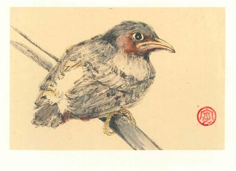 'Fledgling Chick'