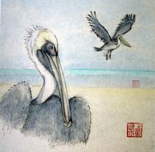Pelicans are my favourite bird