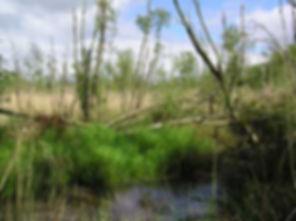 Blo Norton Little Fen water.jpg
