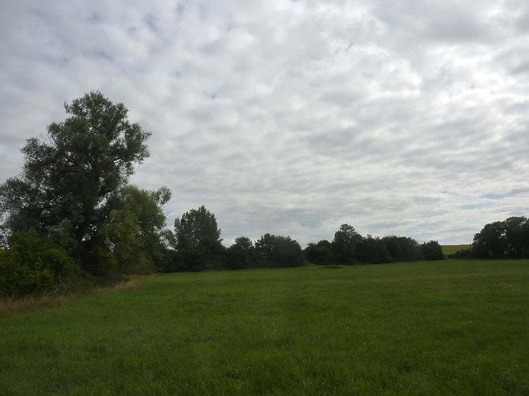 Carr Meadow.jpg