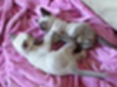 Lily x Oscar 06-04-11 Kamika & Tiqui.jpg