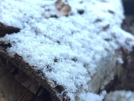 雪ーーー!