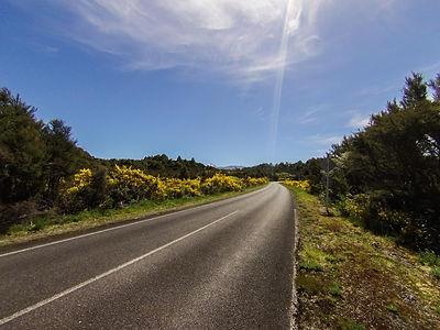 Kaimanawa Novy Zeland