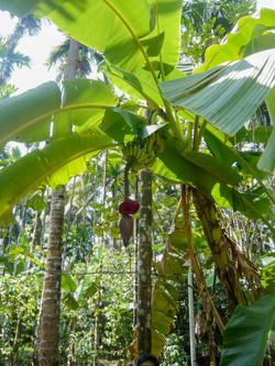 Tropical Spice Plantation Ponda