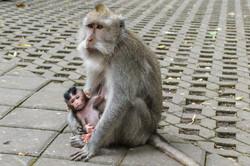 Monkey Forest Ubud Photography