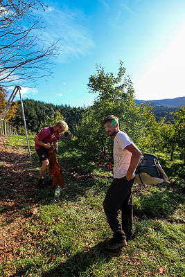 Picking apples Motueka