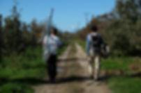 New Zealand Working Holiday - job seeking & life on a farm