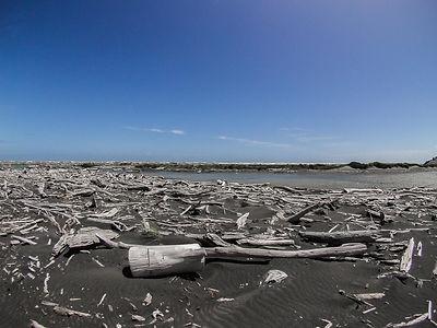 Koitiata Beach
