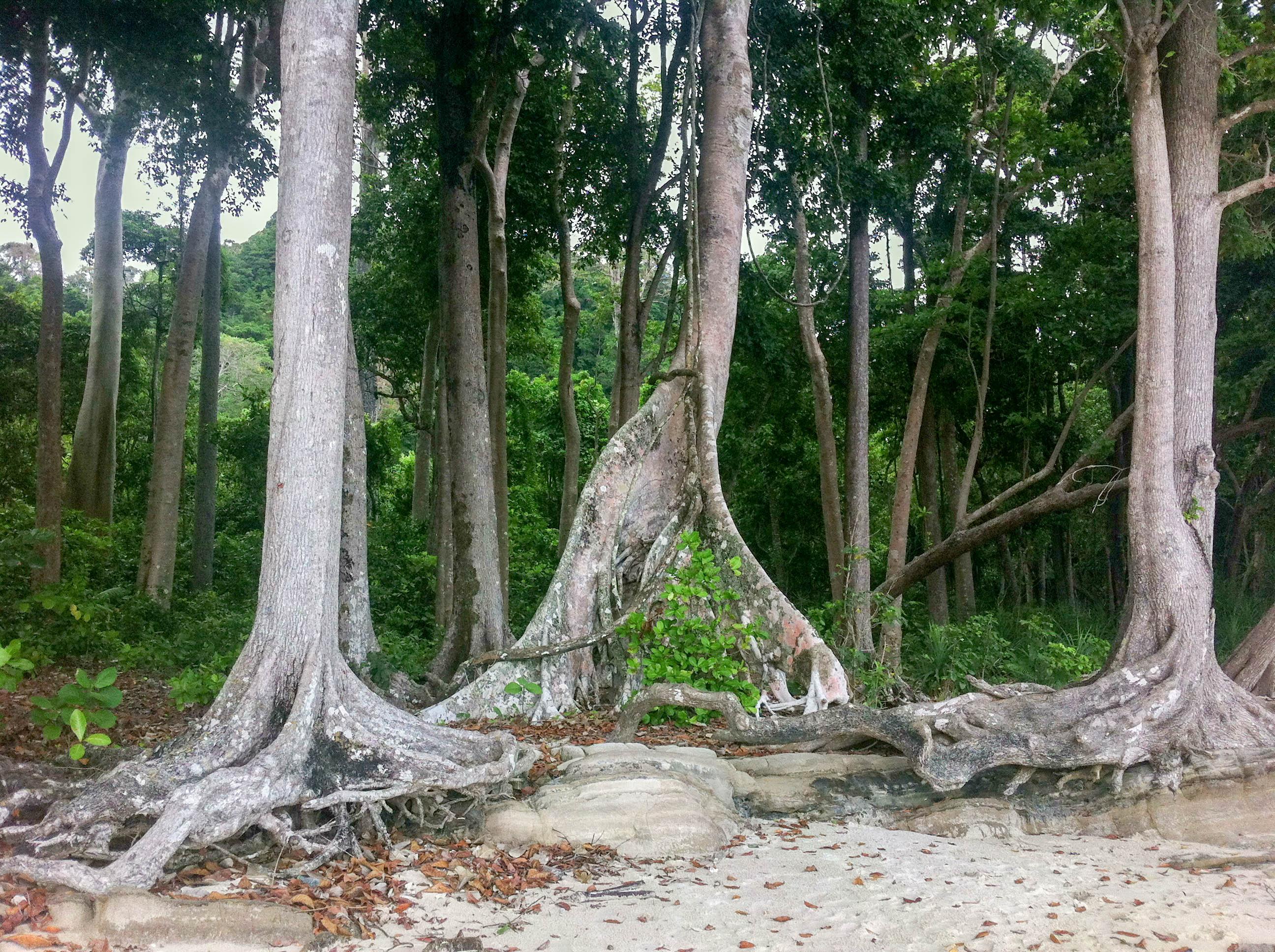 Beach n. 7, Havelock Island