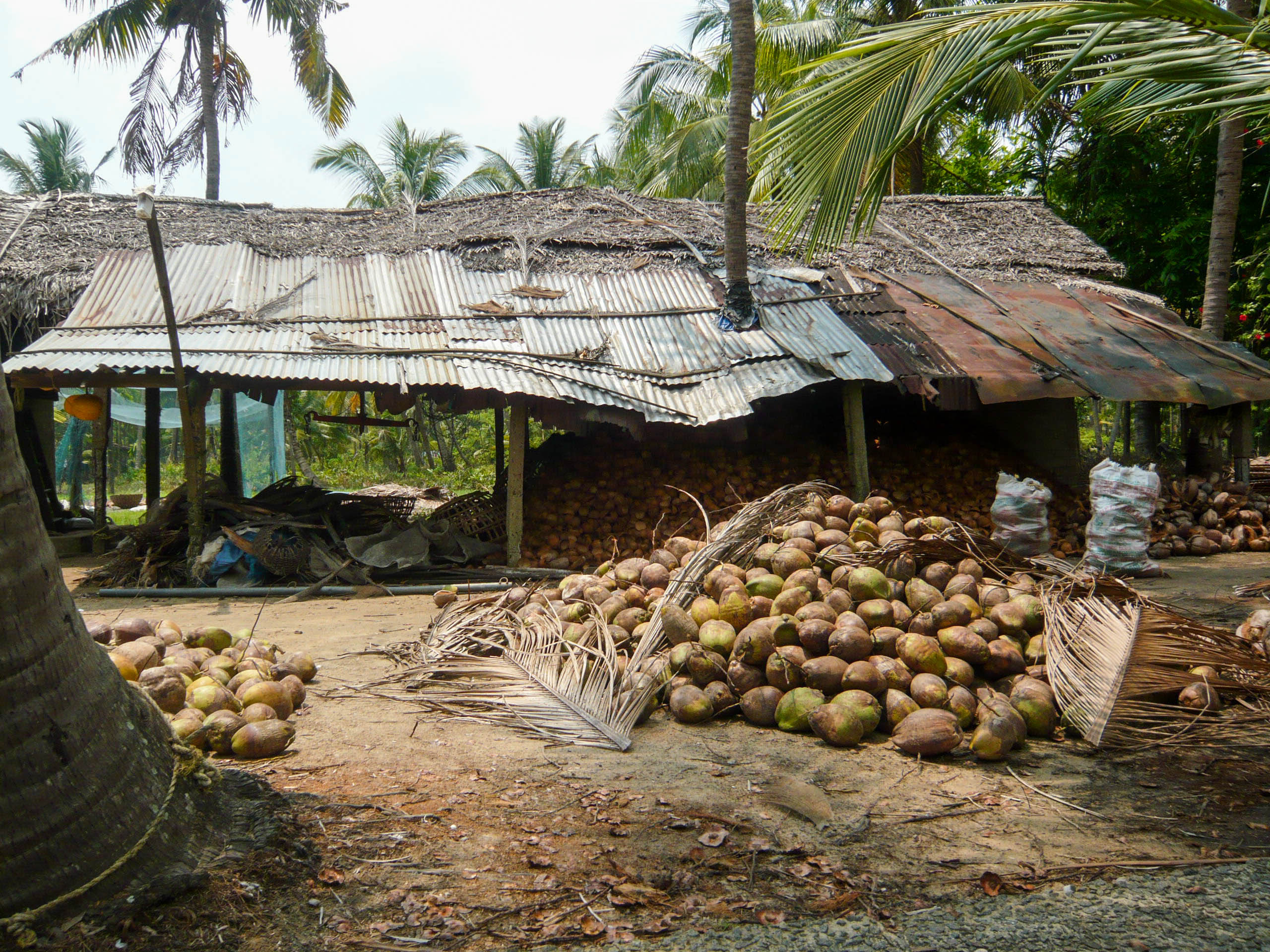 Alleppey-Kollam, kokosová farma