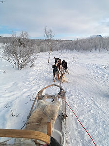 Backpacking.cz - Abisko Lapland Norrbotten Dog Sledding