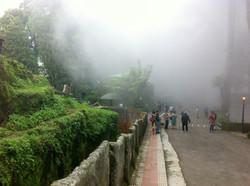 Padmaja Naidu Himalayan Zoo Park