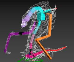3D Model Bones