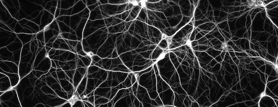 brain_neuron_black.png
