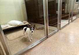 animal hospital floor