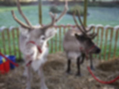 real-reindeer-events-08.jpg