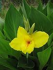 キョン、シカ、イノシシが食べない花と植物 浅香塗装・千葉