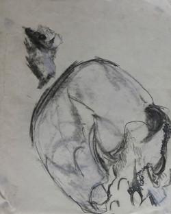 Roman Skull 9th C (#4)