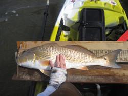 Team Tybee Summer SLam redfish kayak