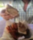grouper reuban.PNG
