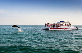 Dolphin Tour Key West Floria