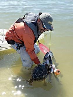 Team Tybee Flounder, Redfish, Trout,