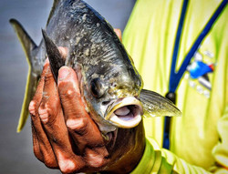 Team Tybee Charter Fishing Guide