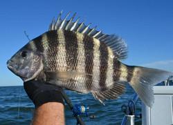 Tybee_Fishing_Company_Convict_Fishing