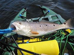 Team Tybee redfish kayak tournament