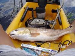 Team Tybee Summer SLam redfish