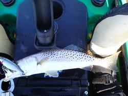 Team Tybee Summer trout SLam
