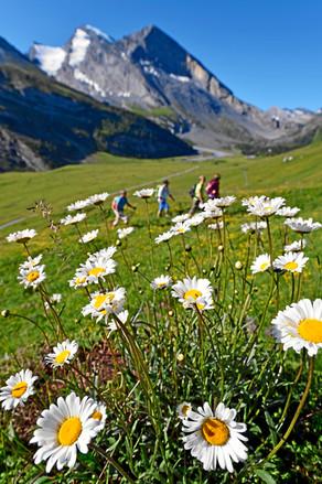 Swiss_Image_SWS14460.jpg
