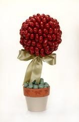cherry topiary DSC_0018.JPG