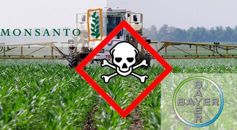 L'UE se couche devant Bayer-Monsanto: opposition à la vente libre de semences paysannes