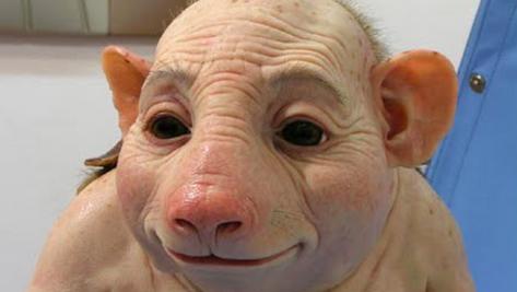 Des scientifiques américains réussissent à créer des chimères homme-cochon