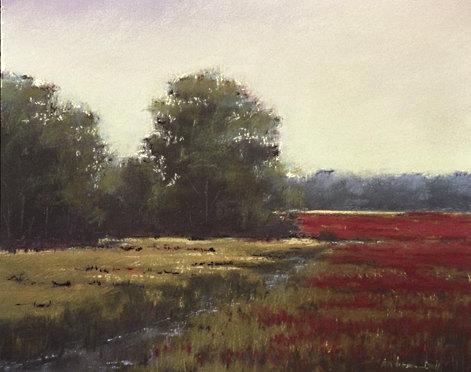 Still Marsh
