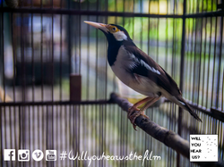 caged birds 2