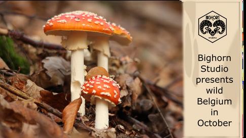 Discover wild Belgium in October