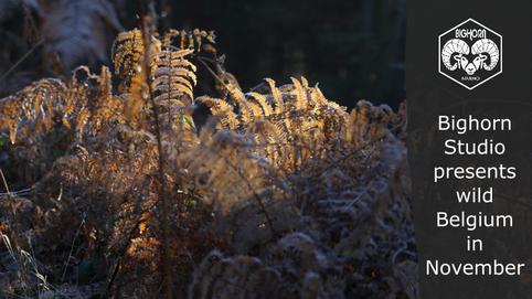 Discover wild Belgium in November